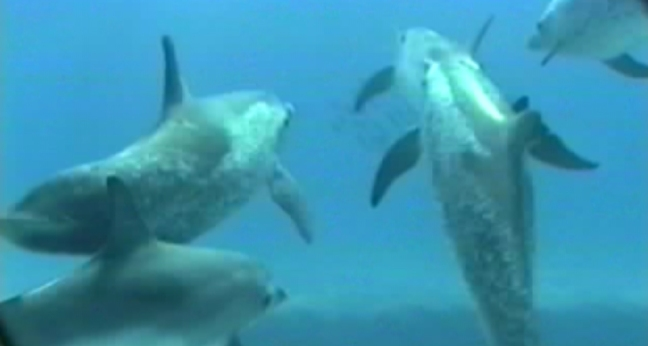 Beacon Dolphins_1